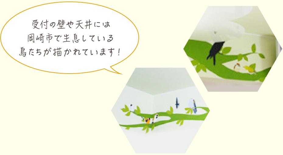 受付の壁や天井には岡崎市で生息している鳥たちが描かれています!